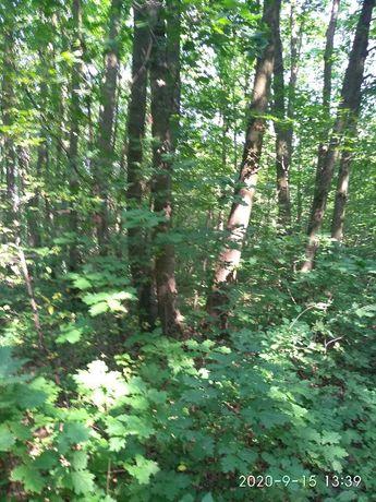 Las Działka leśna - pilnie 1,16ha