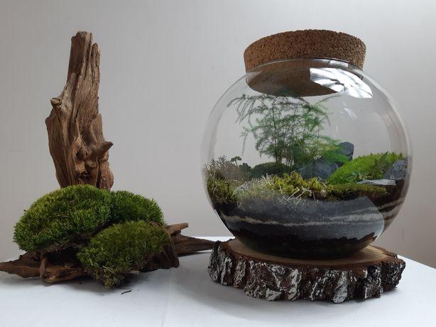 Japoński ogród, las w szkle, słoiku, ekosystem,  terrarium,  rozm. M
