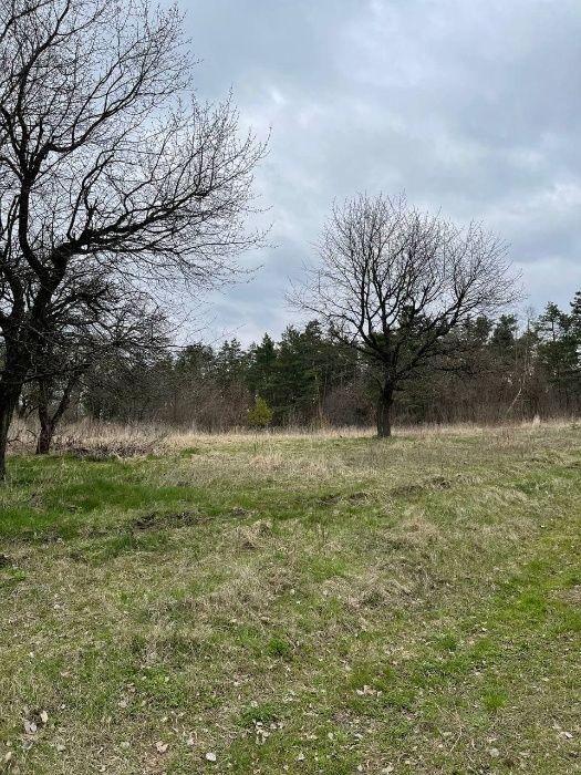 1 гектар лісопосадки в селі Підгірці, 4000 у.о