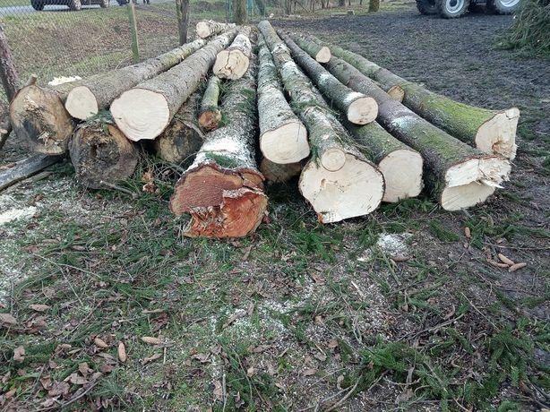 Drzewo tartaczne