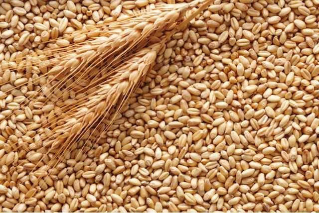 Продам пшеницу..