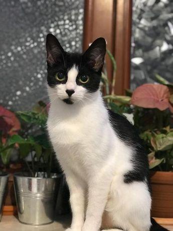Młodziutka kotka Biedroneczka szuka wspólnego domu ze swoją kocią mamą