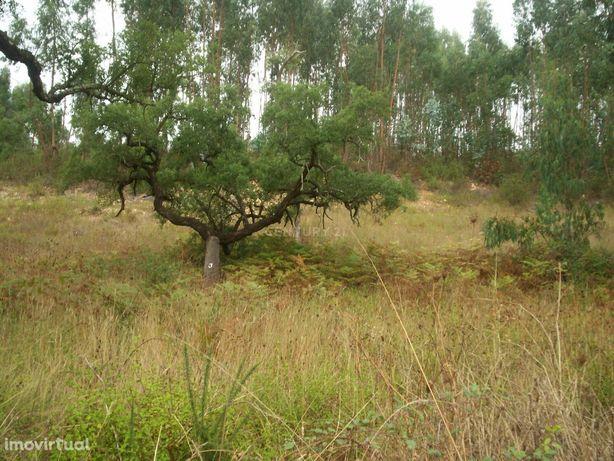 Herdade com 27 hectares a 25 minutos de Vila Nova de Milfontes