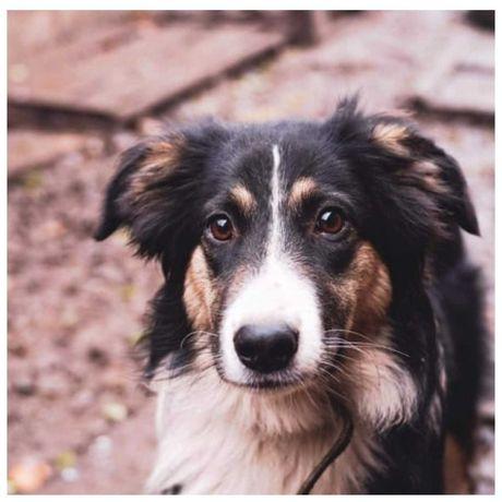 Красивый пес Норд, собака, 1,5 года, привит, кастрирован