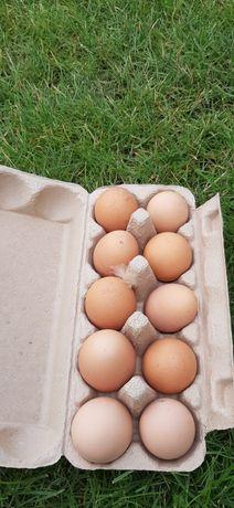 Jaja kurze od kurek z wolnego wybiegu