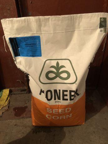 Насіння кукурудзи піонер Pioneer гібрид 8816 фао 300
