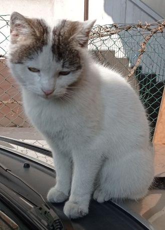 Właściciel kota poszukiwany
