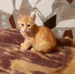 котик в добрые ручки Черноморское Коминтерновского