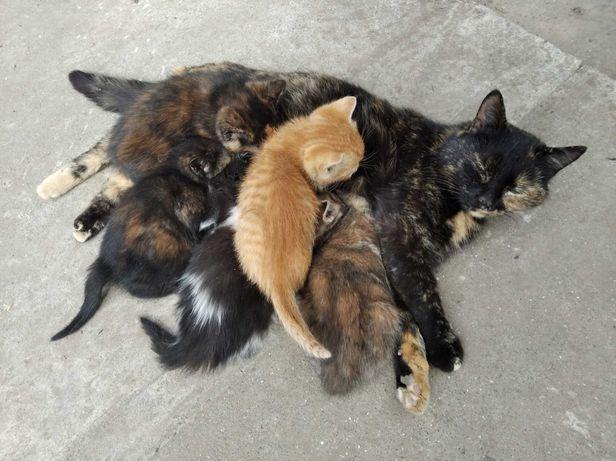 Котяшки забавные
