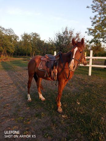 Лошадь  кобыла  продам.