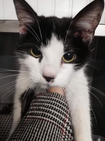Koteczka szuka niewychodzącego domu