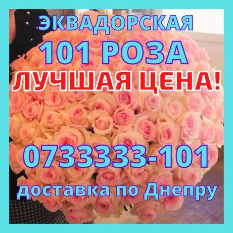 Нежный Букет 101 Розовая роза Эквадор, Доставка Цветов Днепр,ХИТ Цена!