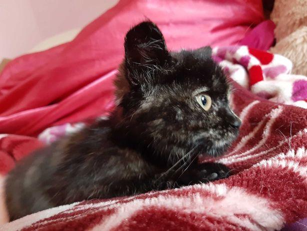 Киця котиня дівчинка