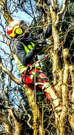 Wycinka drzew Kędzierzyn-Koźle