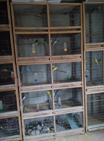 клетка шед для попугаев