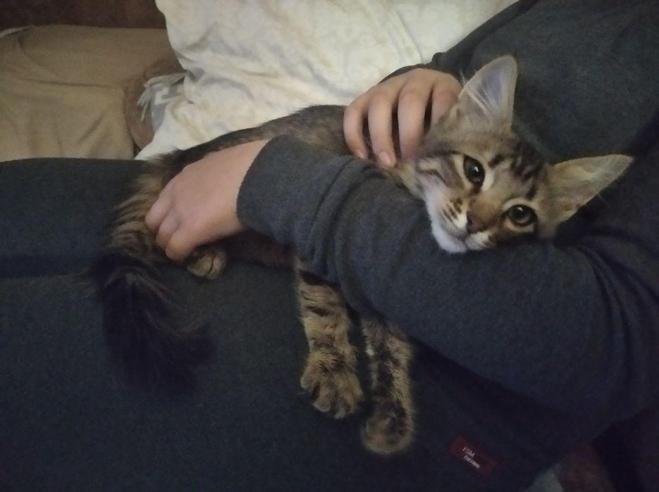 Кошечка Венерочка ищет теплый дом. 4 мес. Лубны - изображение 1