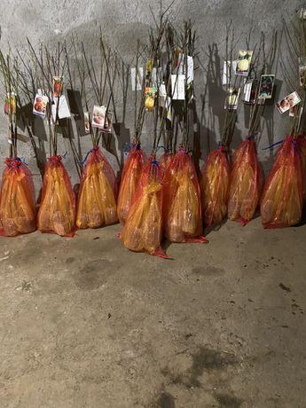 Arvores fruto embaladas