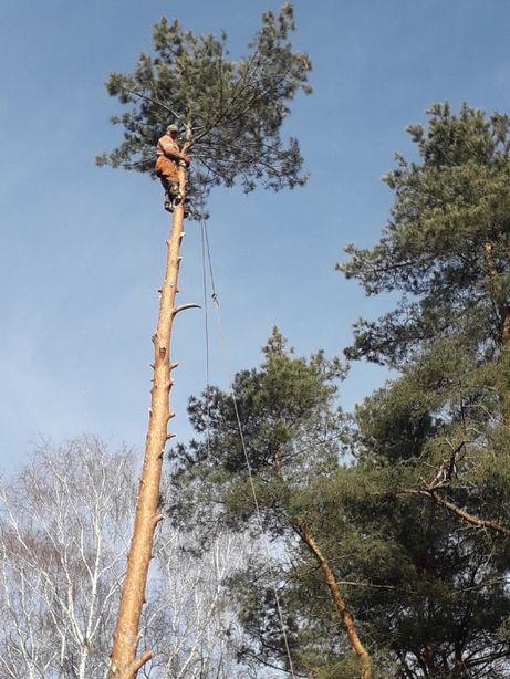 Wycinka drzew, układanie kostki brukowej, ogrodzenia
