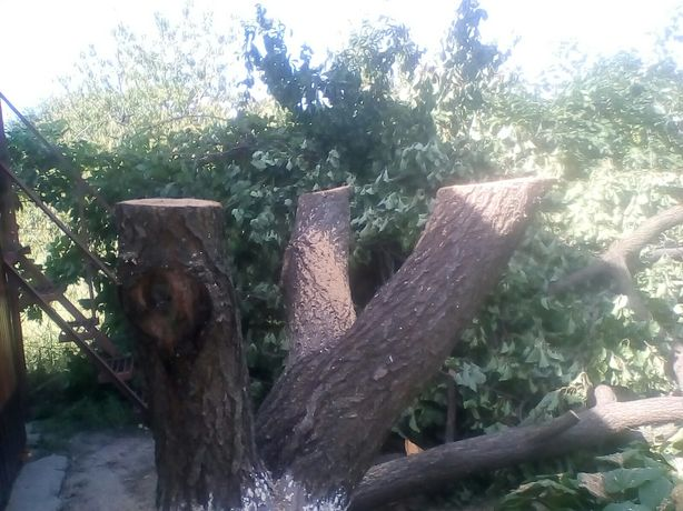 СПИЛ и обрезка фруктовых деревьев