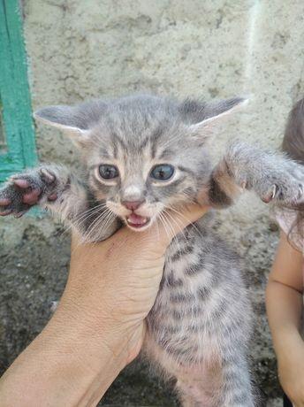 Отдам котика серого
