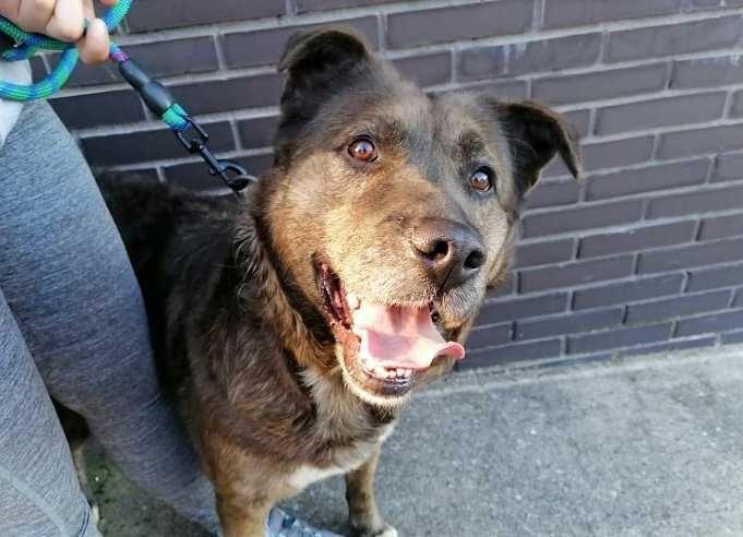 RUCA - Cão porte grande para adoção!