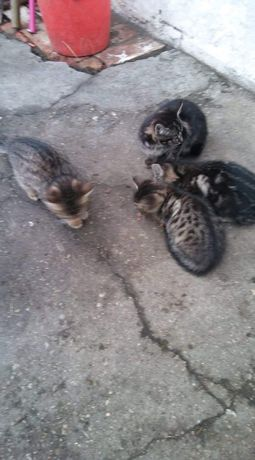 Oddam koty za darmo