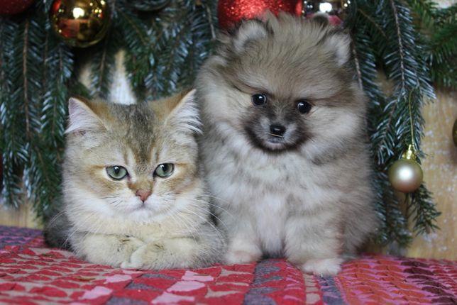 подарунок під ялинку , щеня і кошенята