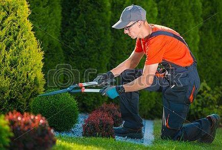 Kościan i Okolice Ogrodowe Pielęgnacje - pełna opieka Twojego ogrodu