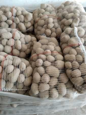 Sprzedam ziemniaki catania