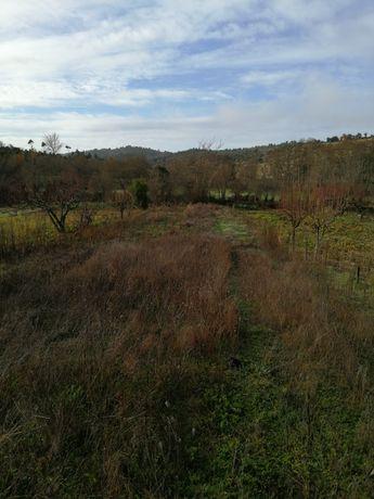 Lotes de terreno para cultivar em Pinhel zona,(guarda,)