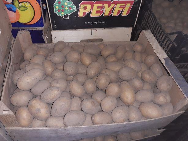 Ziemniaki jadalne wielkość sadzeniaka Lili. Soraya 0.50 zł