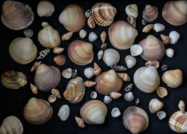 Колекція ракушок і каміння для декору, акваріума чи рукоділля, камушки