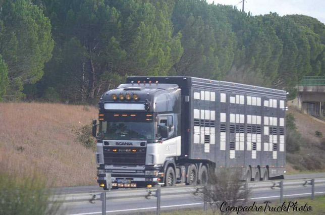 semi reboque de transporte de animais vivos