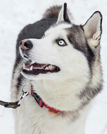 Выгул собак Чернигов