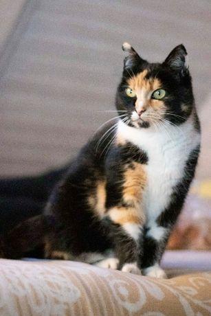 Zaginęła 500 złotych nagrody kotka tricolor