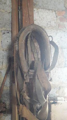Zabytkowy zaprzęg dla krowy