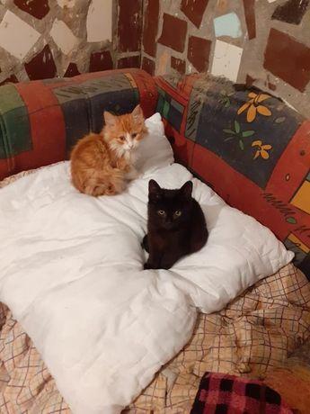 красивые котики в добрые ручки Черноморское Коминтерновского