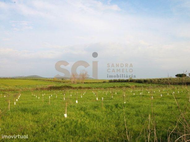 Terreno Rustico com mais de 10 hectares de Olival Intensi...