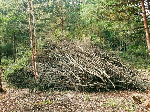 Oddam za darmo drewno - gałęzie
