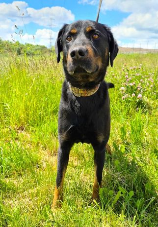 Mstów/ Wancerzów znaleziono psa! Szukamy właściciela!