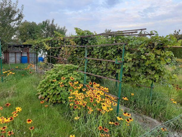 Ogródek Działkowy ROD Kolejarz