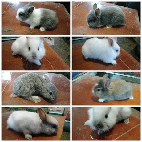 Декоративные Мини крольчата редких окрасок