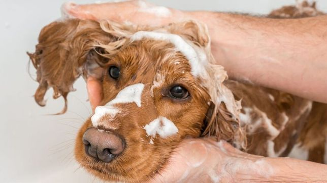 Shampoo Variados | Anti-queda Pêlo Branco etc p/ Cachorro Cão Beaphar