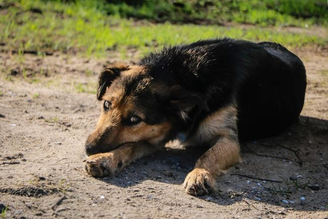 Cão Porte Pequeno (12kg) Para Adoção (Alfredo)