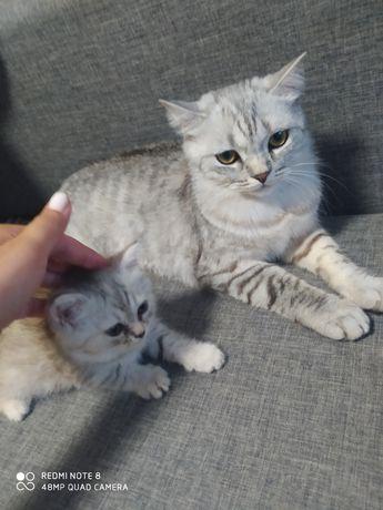 Породистые котята бесплатно!