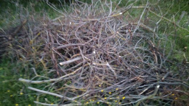 Gałęzie wierzbowe na zrębki