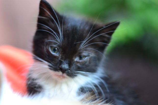 Киця кошеня котик