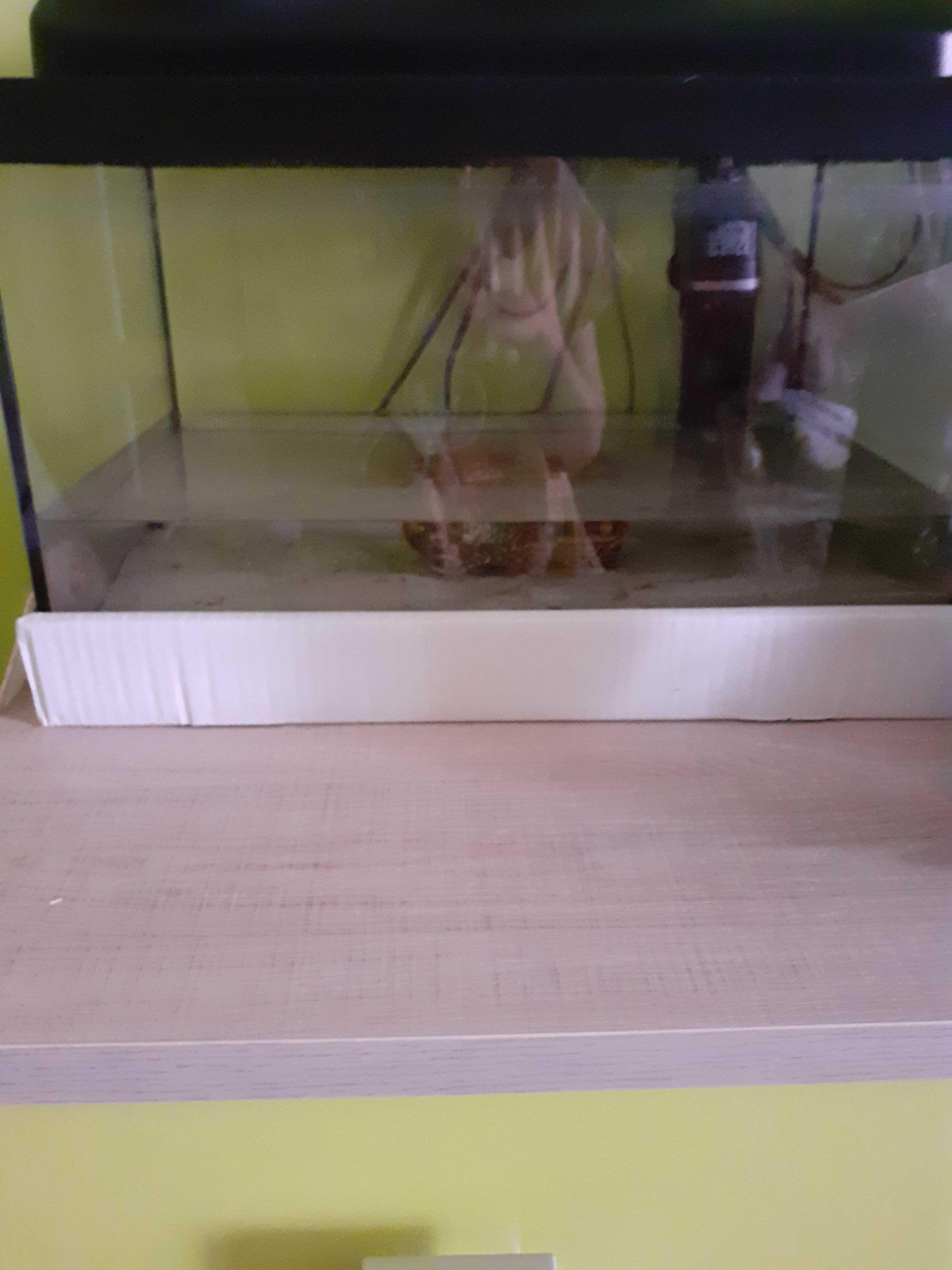 Akwarium do sprzedania