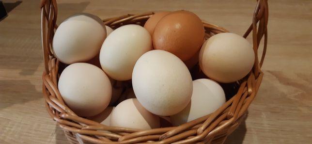 Sprzedam Jajka wiejskie