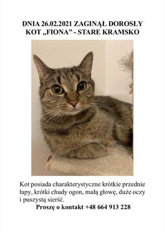 Kot Stare Kramsko zaginął